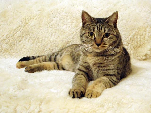 2. 野良猫のマーキング対策