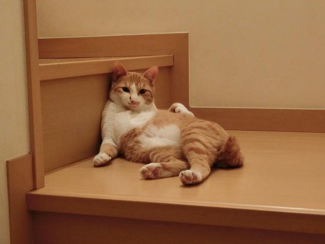 4. 定期的な肛門しぼりで猫のおしりの臭い対策