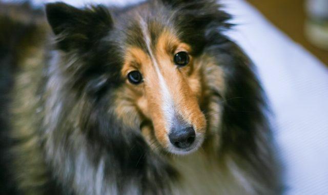 犬がうるさい時の苦情の出し方!飼い主さん側の対策方法もまとめてご紹介!