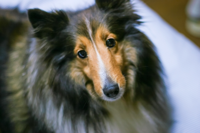 3. 犬がうるさいと苦情が来る前にできる対策
