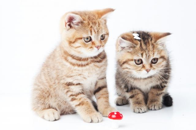 3. 猫が家具や布団におしっこをしてしまったら