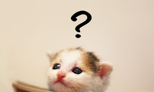 臭いにおいを嗅ぐと猫が変な顔をする!フレーメン反応の正体とは?