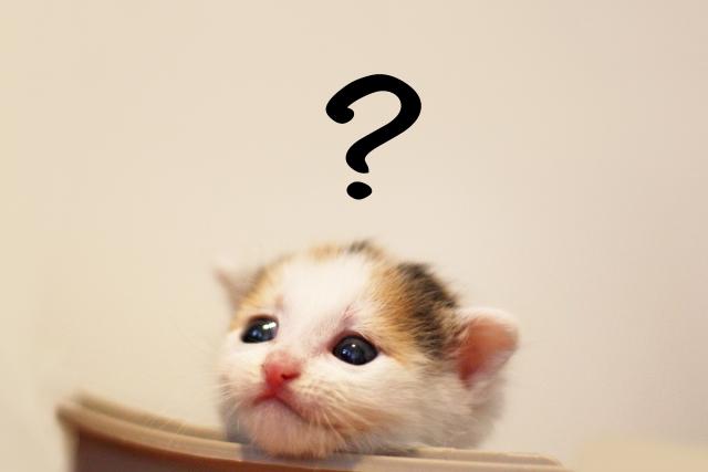 3. 臭い顔をするのはオス猫に多い