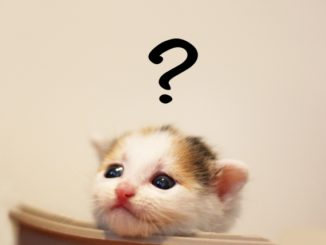 猫臭い人と思われる前に!今すぐできる匂いの対策方法をまとめてご紹介!