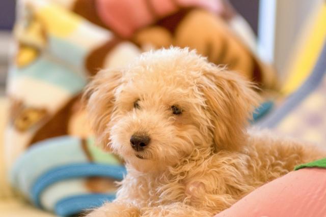 4. 隣の犬がうるさい時におすすめな対処方法