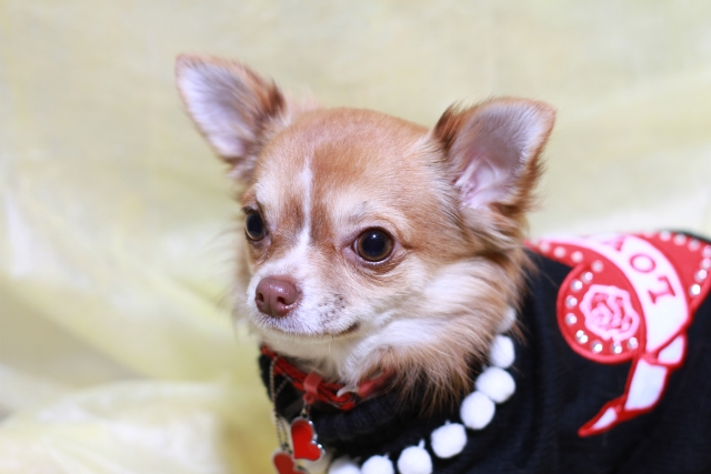 3. 電車や新幹線で犬がうるさい時にやってはいけない行動