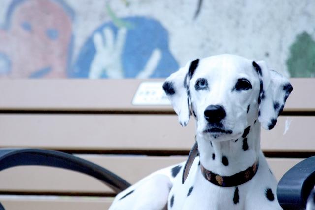 1. 犬の口臭の原因となる口内の病気