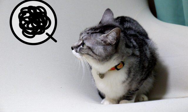 猫のおしっこが臭いのはなぜ?匂いの原因とおすすめな対策方法をご紹介!