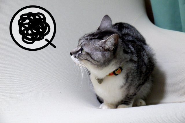 4. 急に猫のおしっこが臭くなったら病気かも