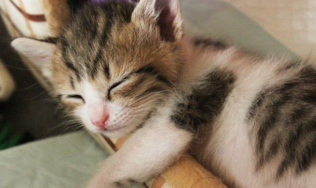 猫の臭い下痢や軟便が続く時は要注意!その原因と病気の可能性について!