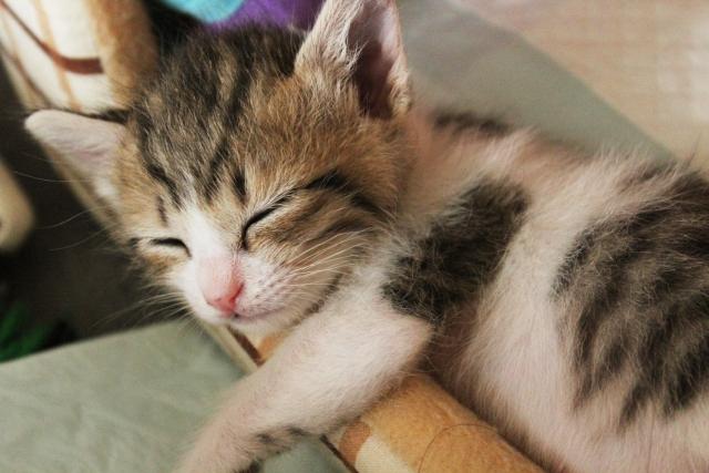 3. 猫のおしりが臭いのは肛門腺の破裂かも?