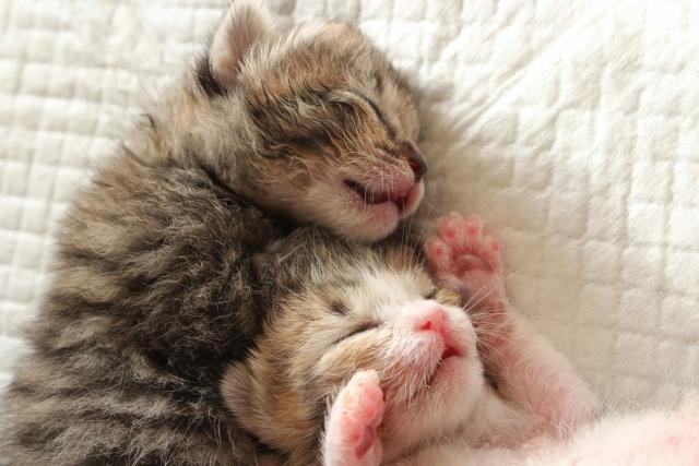 1. 猫のおしっこが臭い原因
