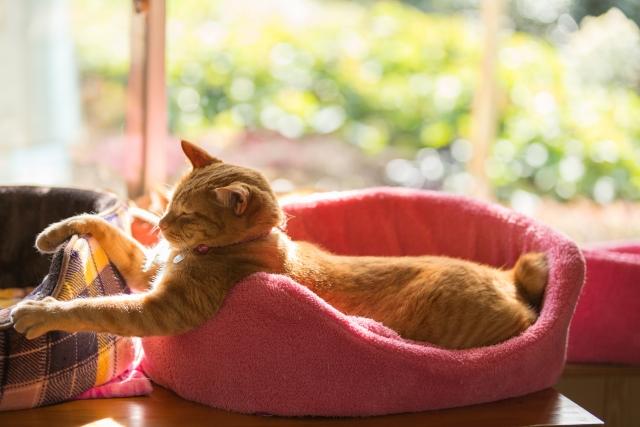 2. 猫のおしっこの臭いを緩和させる対策方法