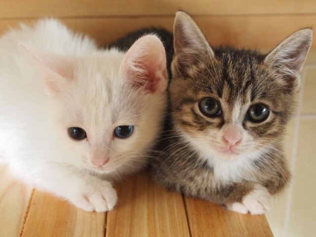 1. 猫の軟便の見極め方