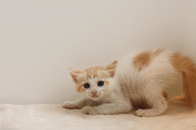 1. 室内での猫の糞の臭いを消す
