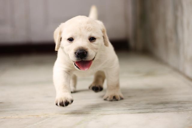 1. 子犬の夜泣きがうるさい原因と対策