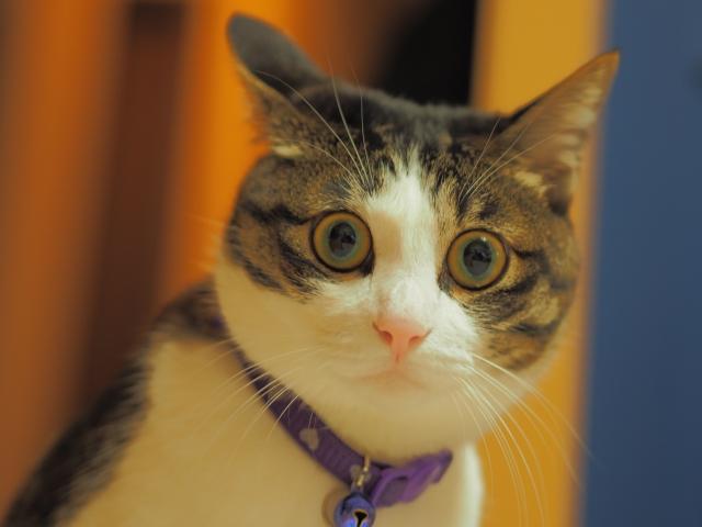 2. 猫が臭いを発生する理由