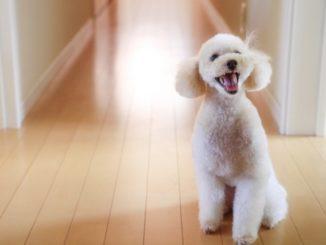 犬の夜泣きがうるさい!その原因とオススメなしつけ方法をまとめてご紹介!