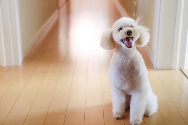 3. 成犬の夜泣きがうるさい原因と対策