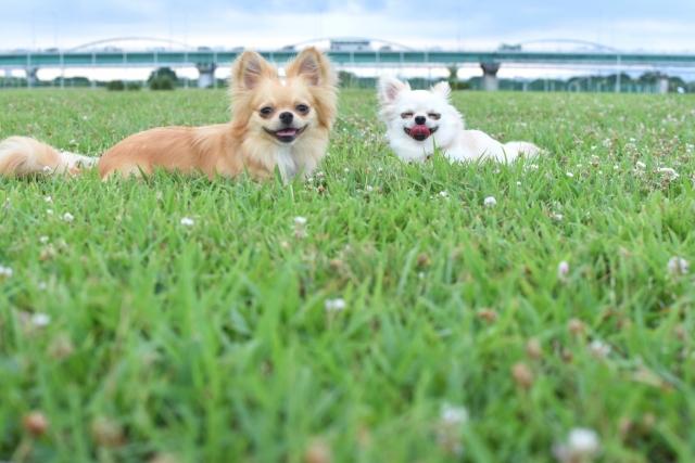 1. 犬の口臭対策にヨーグルトがおすすめな理由