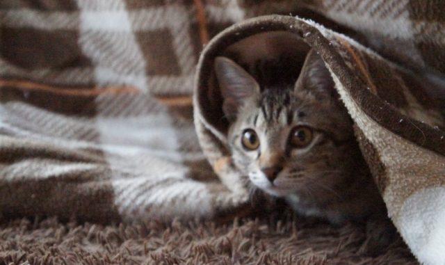 家の中が猫臭い!その原因とすぐにできる消臭対策を徹底解説!