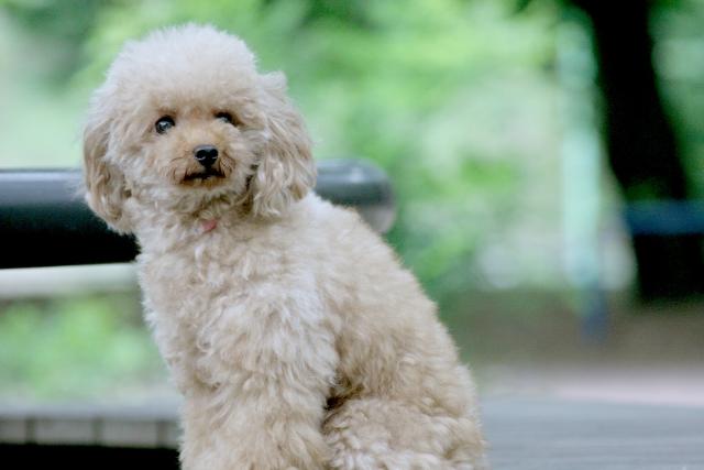 1. 犬の口臭対策でガムが有効な理由