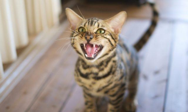 猫にマーキングされた場所の臭い消しに!効果抜群の消臭方法とおすすめグッズ!