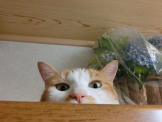 猫のトイレが臭い!効果抜群のおすすめな消臭対策を徹底解説!