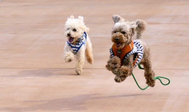ヨーグルトで犬の口臭が予防できる!与えてもいい商品と注意点を徹底解説!