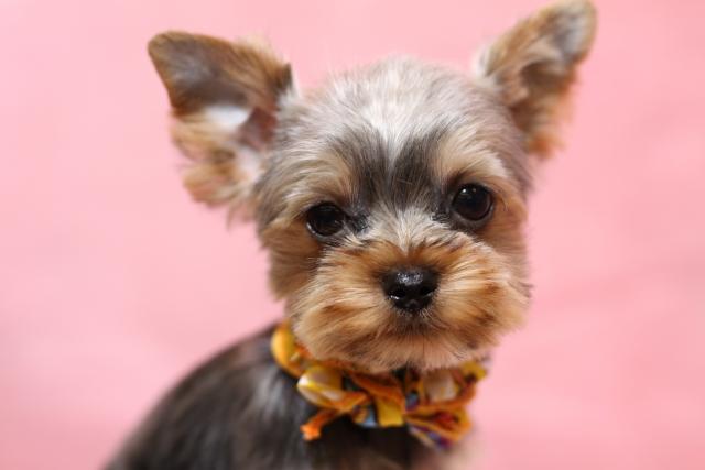 4. 犬の口臭対策におすすめな歯磨き用ガムの選び方